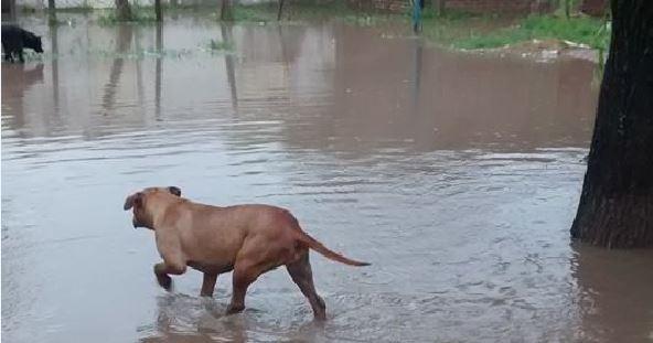 VGG Inundado