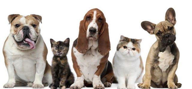 mascotas 1002